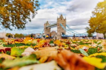 London im Herbst: buntes Laub auf einer Wiese vor der Tower Bridge bei Sonnenschein