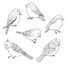 Vector Birds Outline Set. Vintage Collection Of Doodles In Sketch Style. Cardinal, Sparrow And Titmouse.