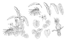 Set Of Elements For Design With Tropical Plants
