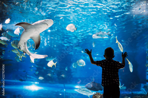 Tablou Canvas Serious boy looking in aquarium with tropical fish