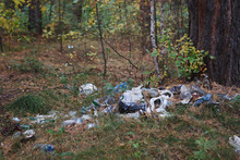 Pile Of Garbage In A Pine Fore...