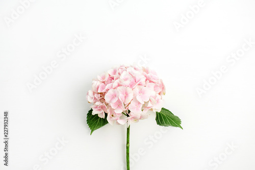 La pose en embrasure Hortensia Pink hydrangea flower isolated on white background. Flat lay, top view.