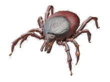 3d Rendered Illustration Of A Tick On White Background