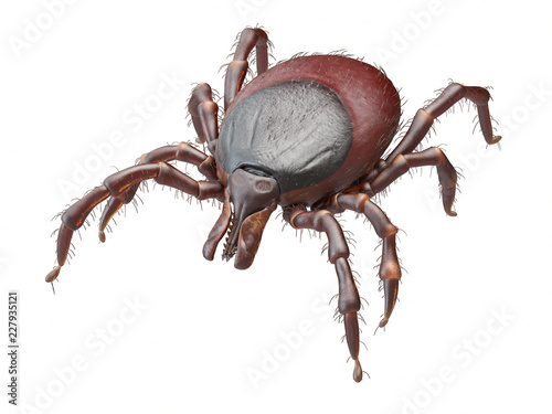 3d rendered illustration of a tick on white background Wallpaper Mural