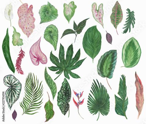 kolorowa-kwiecista-kolekcja-z-tropikalnymi-liscmi-i-pieknymi-kwiatami-rysuje