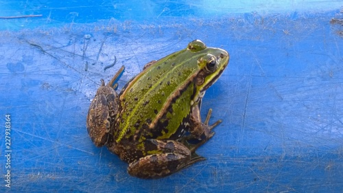 Green frog on the blue kayak