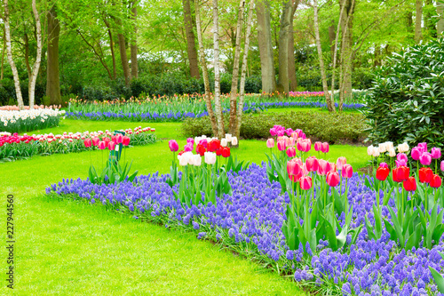 Papiers peints Jardin fresh spring lawn with green grass and spring flowers