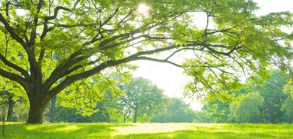 Fototapety, obrazy: Park tree