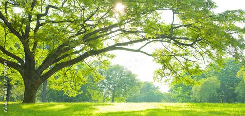 Stickers pour portes Vert chaux Park tree