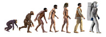 Human Evolution, From Ape To A...