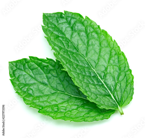 In de dag Aromatische mint leaves isolated