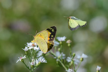 Close-Up Of A Butterfly And A ...