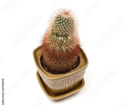 Foto op Plexiglas Cactus Decorative cactus on a white background