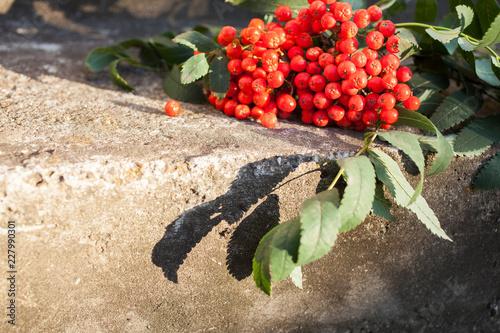 Photo Rowan berries on concrete pavement