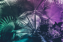 Neon Tropical Palm Leaf Inspir...