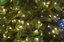 Close Up On Christmas Tree Wit...