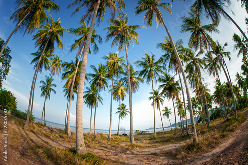 Photo sur Toile Plage High coconut palm trees in public park on tropical island