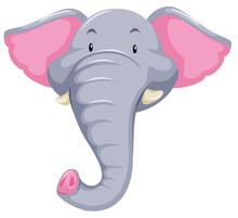 Elephant Head White Background