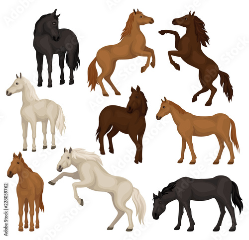 Photographie Flat vector set of brown, beige and black horses in different poses