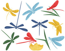 Flat Vector Set Of Colorful Dragonflies. Small Fast-flying Creatures With Long Body And Two Pairs Of Wings. Predatory Insect