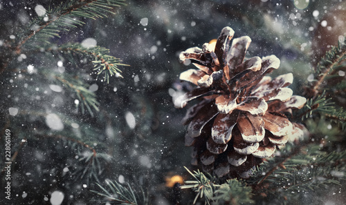 Obraz Christmas or New Year blurred snow background with festive fir tree and pine cones, selective focus - fototapety do salonu