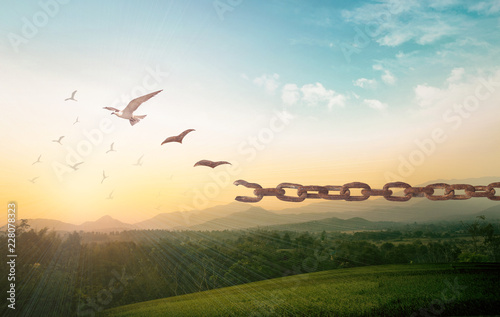 Fotografía Freedom concept: Silhouette of bird flying and broken chains at autumn mountain