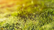 Morning Dew On The Grass, Sunl...