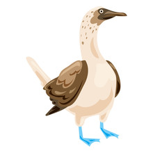 Blue Footed Booby Icon. Cartoo...