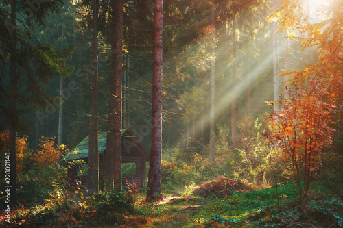 Autumn forest with sun rays and wooden blockhouse pavilion Canvas Print