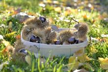 Little Basket Full Of Fresh Sw...