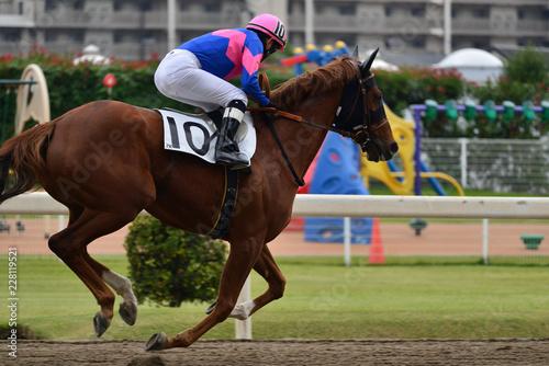 Vászonkép race horse