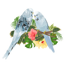 Birds Budgerigars, Home Pets ,...