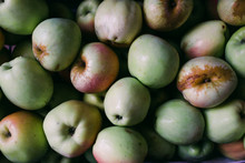 Raw Freshly Collected Apples