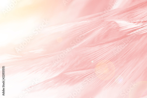Photo sur Aluminium Flamingo Beautiful Coral Pink vintage color trends feather pattern texture background with orange light