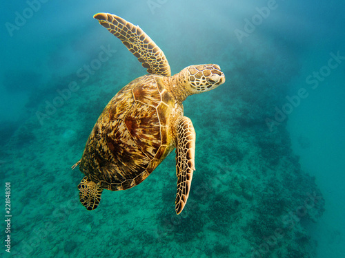 Close-up of sea turtle swimming undersea
