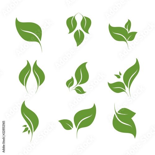 Fototapeta Leaves icon vector set isolated on white background. Various shapes of green leaves of trees and plants. Elements for eco and bio logos. obraz na płótnie