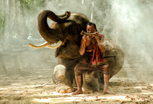 Mahout Sitting On Elephant's Leg And Blowing Musical Instrument, Thailand
