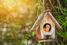 Old Wooden Birdhouse Was Hanging Under Big Tree With Green Leaves Background And Sunset Light