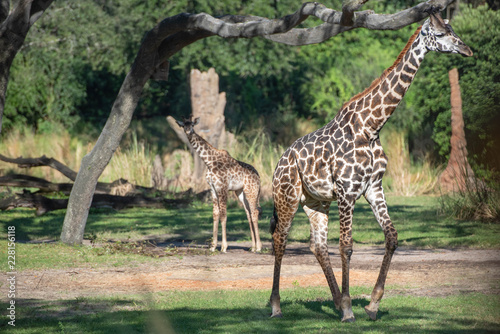 Photo  giraffe party