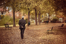 Lonely Senior Man At The Park In Fall Season, Back View Of Person Walking In A Urban Park
