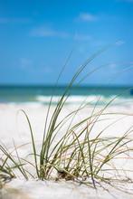 Close Up Of Grass On Beach Sand