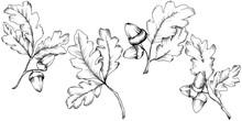 Vector Autumn Oak Leaves. Leaf Plant Botanical Garden Floral Foliage. Isolated Illustration Element. Vector Leaf For Background, Texture, Wrapper Pattern, Frame Or Border.