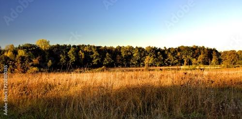 Keuken foto achterwand Turkoois autumn at forest