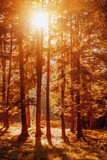 Awesome image of colorful indian summer forest. Sun beams through trees. Golden Autumn Panorama.