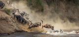 Wildebeests are crossing  Mara river. Great Migration. Kenya. Tanzania. Maasai Mara National Park. - 228183345