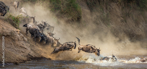 Fotomural Wildebeests are crossing  Mara river