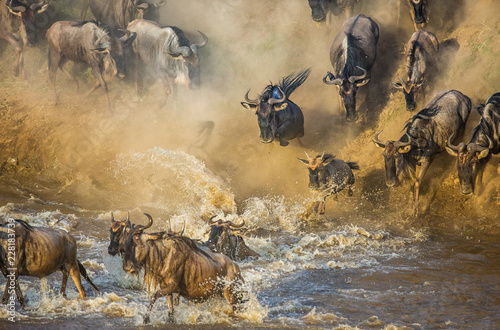 Wildebeests are crossing Mara river. Great Migration. Kenya. Tanzania. Maasai Mara National Park.