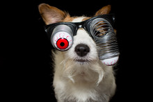 FUNNY HALLOWEEN DOG WEARING A ...