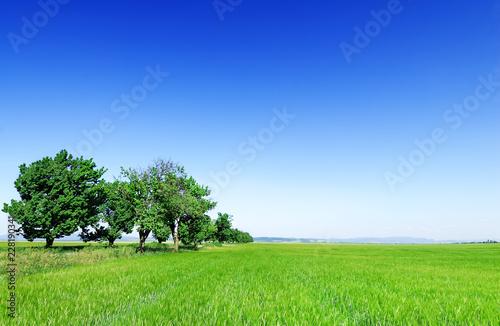Idyllic view, trees among green fields
