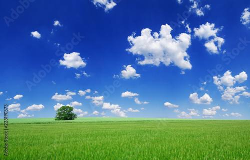 Idyllic landscape, lonely tree among green fields